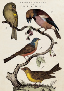 Poster - 'History of Birds'