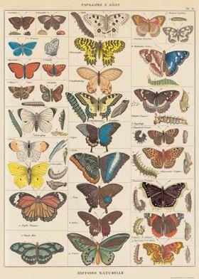Poster - Fjärilar vintage