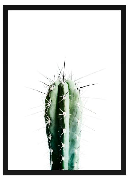 Poster - Kaktus