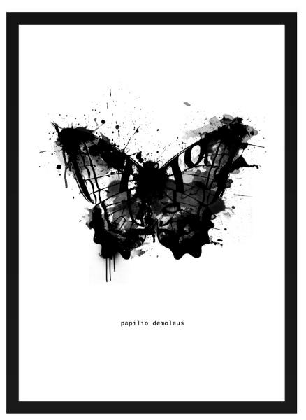 Poster - Fjäril grafisk