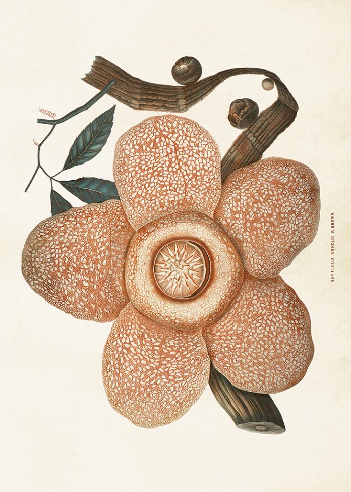 Poster - Vintage blomma