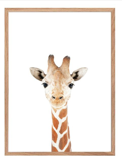 Poster - Giraff