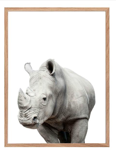 Poster - Noshörning